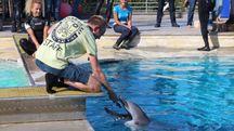 La delfina Mia