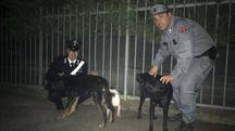 Luna, Nero e Garcia: i tre cani salvati dai carabinieri e dalla Forestale di Monterenzio