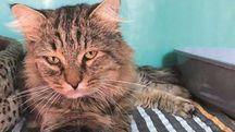 Il gatto Leon