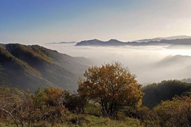Lo spettacolo dei colori dell'autunno che si rinnova nel Parco delle Foreste Casentinesi (foto Giordano Giacomini)