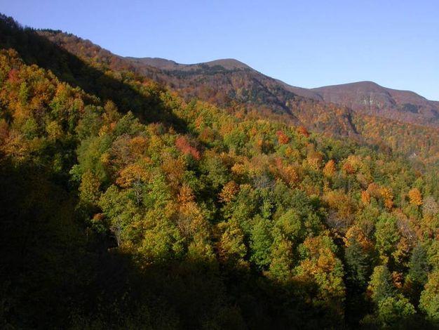 Sull'Appennino, fra Romagna e Toscana, il mondo prende tutto un altro colore (foto Nevio Agostini)
