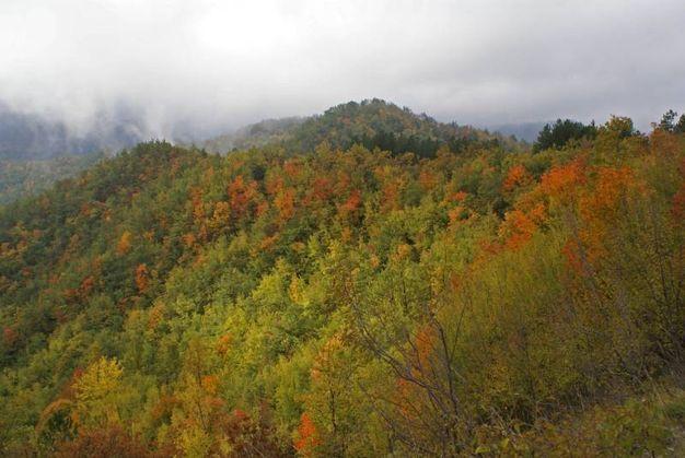 L'Appennino tosco romagnolo permette un'eccezionale biodiversità, con oltre quaranta specie di alberi (foto Giordano Giacomini)