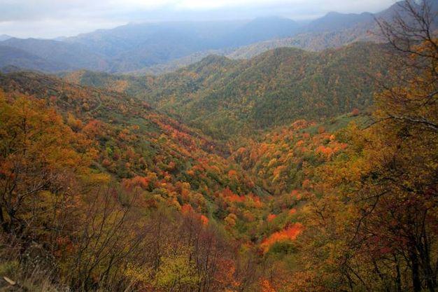 I colori dell'autunno nelle Foreste Casentinesi