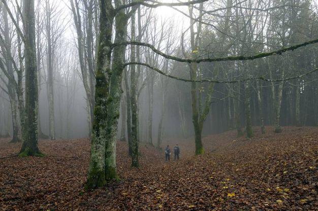 Si colora soprattutto la fascia montana, sopra gli 800 metri, poi agli inizi di novembre il  'fall  foliage' raggiunge il culmine anche nella fascia collinare