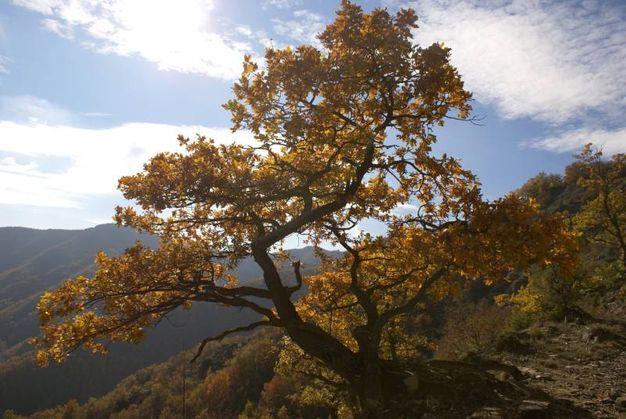 La Valle di Pietrapazza e la salita al Monte Tiravento da Premilcuore sono fra gli itinerari consigliati (foto Nevio Agostini)