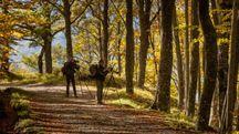 Scorci tra le foreste Casentinesi