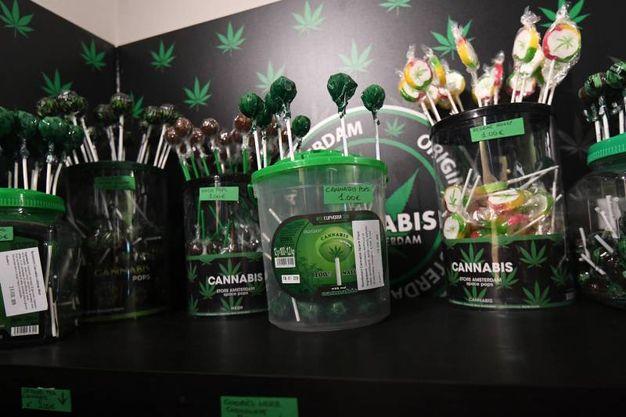 Uno dei negozi di cannabis light ha aperto battenti, quindi, in pienissimo centro, a pochi passi da piazza Maggiore (Foto Schicchi)