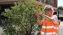 Claudio 'il Gallo' Golinelli al lavoro a Borgo Tossignano