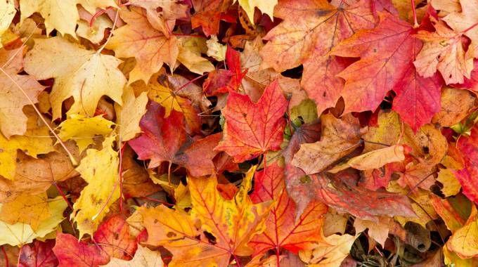 Foliage (Foto: fotojog/iStock)