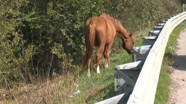 Un cavallo a margine della strada (foto repertorio)