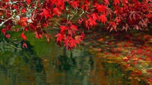 Il fascino dell'autunno
