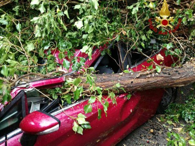 L'albero caduto su un'auto a Marciana, all'isola d'Elba (Ansa)