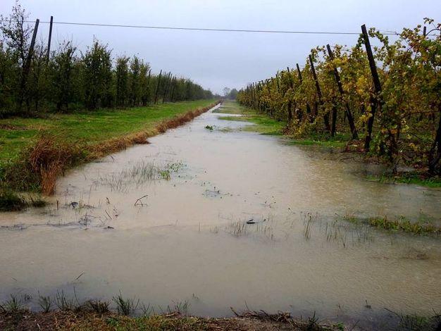 Fossi colmi d'acqua in via Olmo a Belricetto (Foto Scardovi)