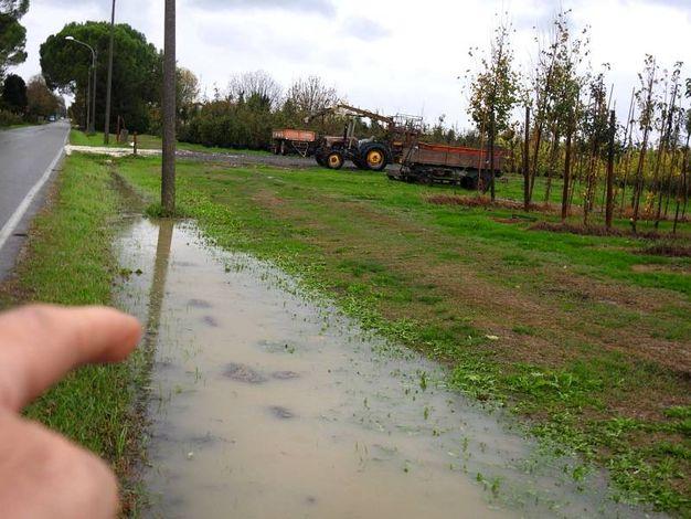 Via Pastorella a Voltana (Foto Scardovi)