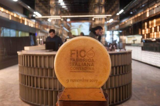Anche il parmiggiano è 'Made in Fico'  (foto Schicchi)
