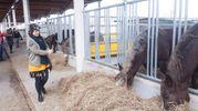 Gli animali fanno parte delle 6 filiere agroalimentari complete presenti a Fico  (foto Schicchi)