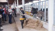 Le stalle servono per fare conoscere la trasformazione alimentare  (foto Schicchi)