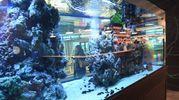 Non mancano anche i pesci (foto Schicchi)