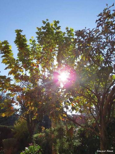 In giardino a Zola Predosa, foto di Sanzio Ravaglia
