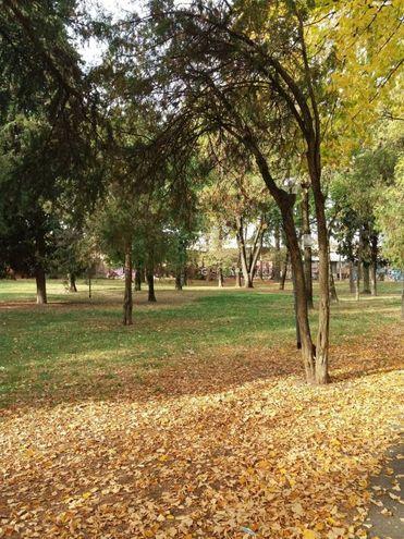 Parco dei Pini, foto di Daniela Lelli