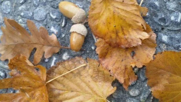 Fotografia scattata da Susanna nel suo giardino a Pesaro