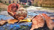 L'autunno secondo Ramona Neri