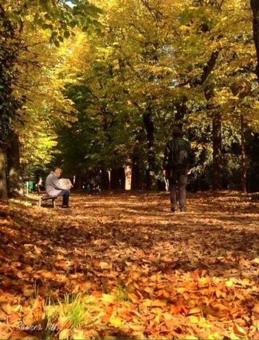 I colori dell'autunno negli scatti di Ramona Neri