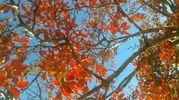 Foto scattata da Donatella. Donatella. Colori d'autunno alla Celletta