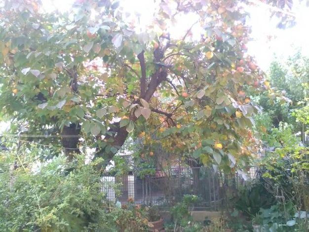 Foto scattata da Michela, il suo giardino in zona Carducci
