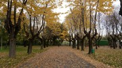 Foto scattata da Enrico a Borgo Santa Maria al Foro Boario