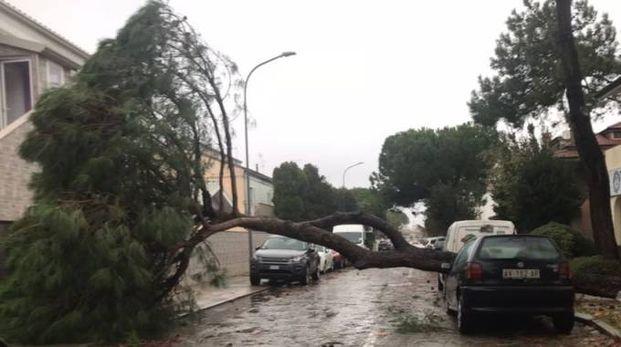 Un albero caduto a Porto Garibaldi