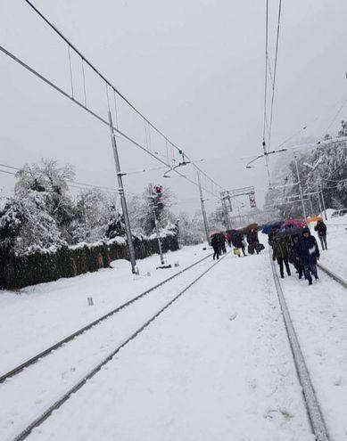 Sasso Marconi, treni bloccati per un albero caduto sui binari. Foto Di Elsa Ballerini
