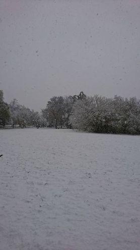 Neve a Bologna, foto scattata da Roberta