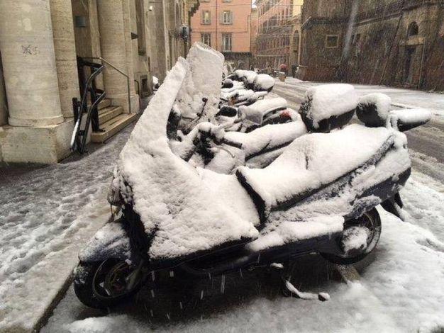 Scooter coperti di neve, foto di Fiorella Baldisserri