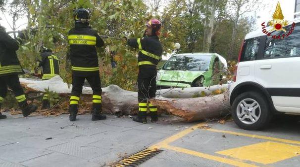 Un albero caduto su un'auto a Grosseto