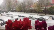 Ciclamini sul balcone e neve in strada, foto di Michele Faccioli