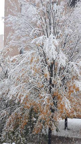Dall'autunno all'inverno in un giorno. Foto di Stefania Tazzi