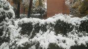 Palme sotto la neve (foto di  Vittorio Vescogni)