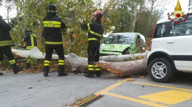 L'albero caduto su un'auto in via Saffi
