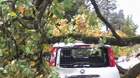 La Fiat Panda di servizio completamente avvolta dall'albero caduto; in basso Elisabetta Taborra