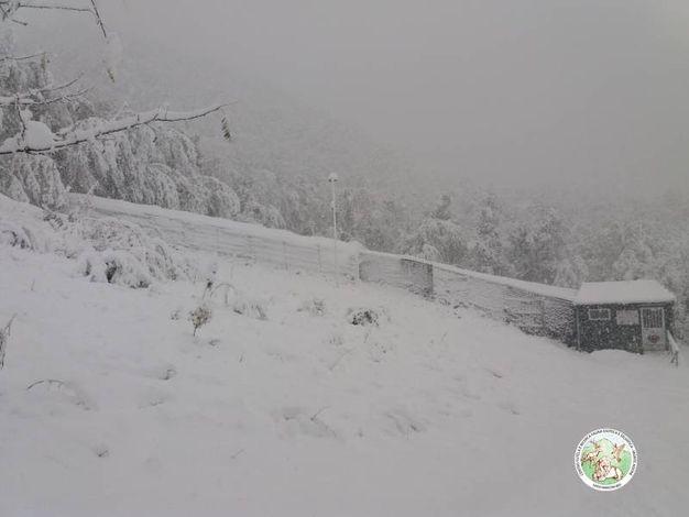 Il centro di Tutela e Ricerca Fauna Esotica e Selvatica a Monte Adone sommerso dalla neve