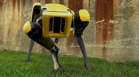SpotMini ci osserva... (Foto: Boston Dynamics/YouTube)