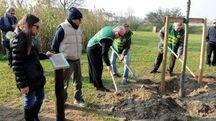 La piantumazione della quercia dedicata a Verri (foto BusinessPress)