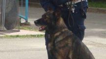 Il cane Axel in azione