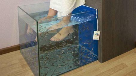 La fish terapy (National Press)