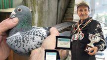Fortunato Galeotti, 84 anni, allevatore di colombi a Urbino (Foto Ottaviani)