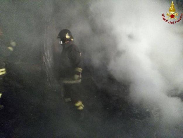 Marina di Grosseto, incendio nella pineta di via del Marinaio