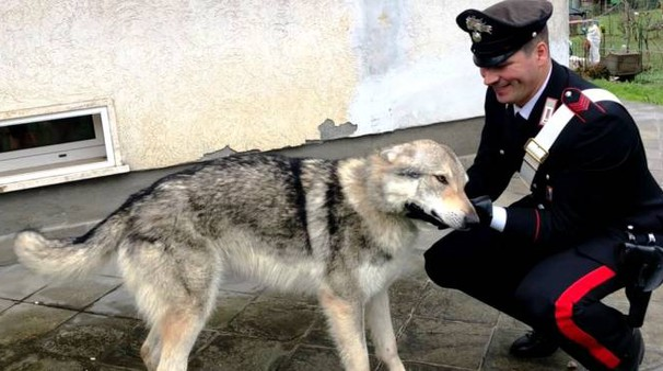 Wolf assieme a un carabiniere della caserma di Riccò del Golfo