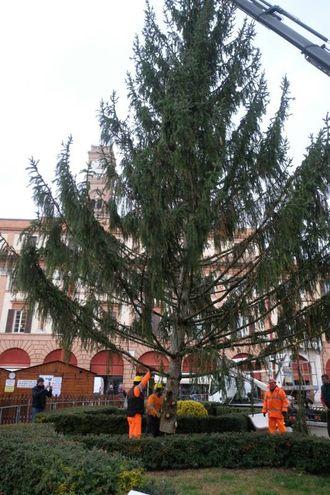 A reperire la pianta è stato l'Ufficio ambiente della Regione (foto Frasca)