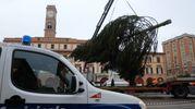 Una nota stampa del Comune spiega che la scelta di questo albero è frutto «di una programmazione nell'ambito dei piani di manutenzione e diradamento». (foto Frasca)